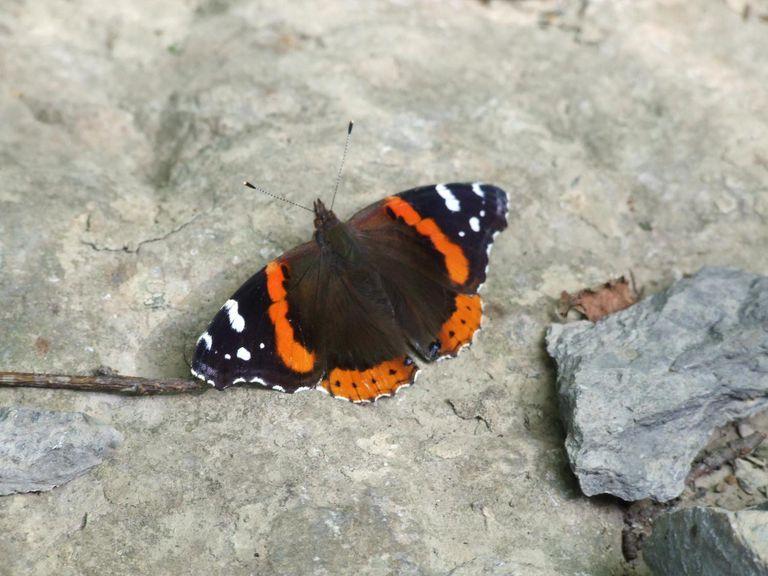 Basking on a sunny rock.