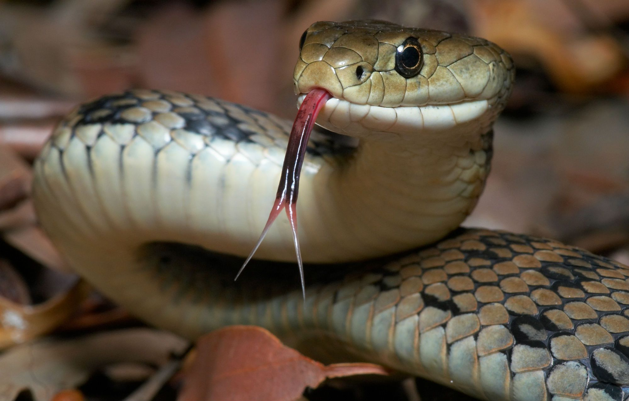 Why punish the snake for telling truth to adam and eve buycottarizona Choice Image