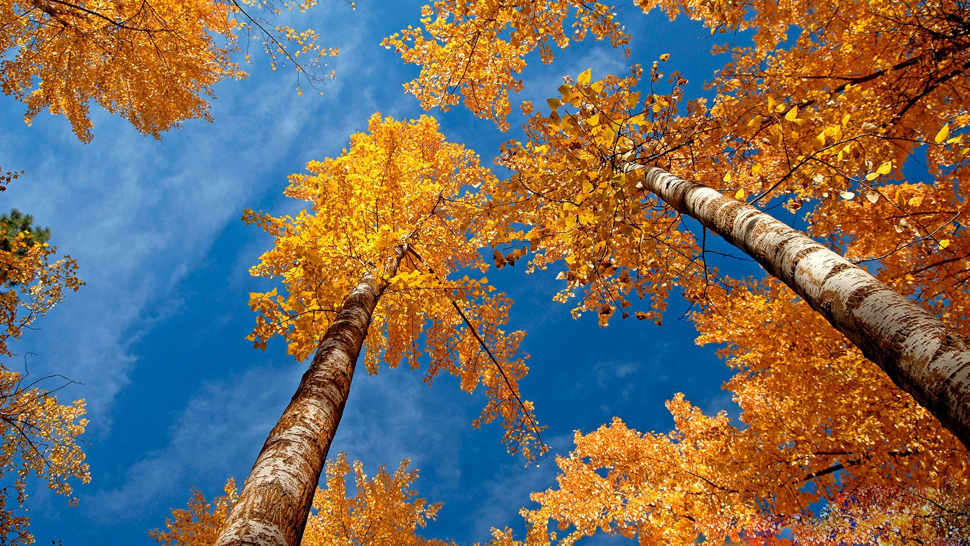 39 Autumn Wallpapers for Computers Tablets or Phones