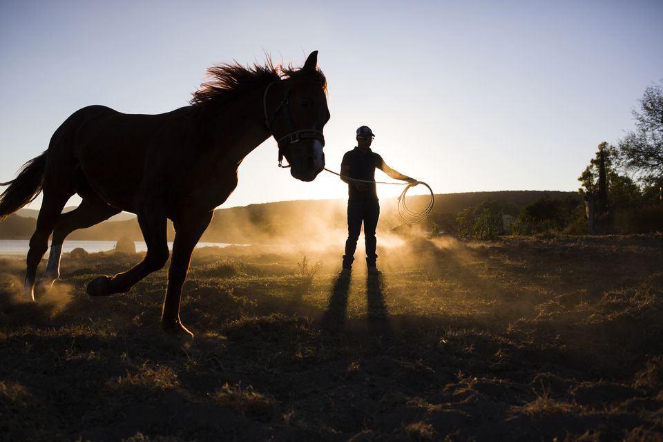 Man training horse on rein