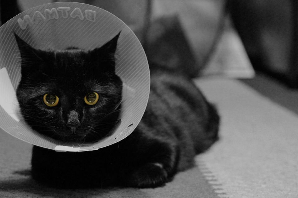 Cat wearing a medical cone