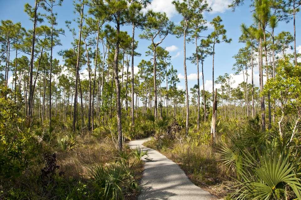 Everglades Pinelands Trail