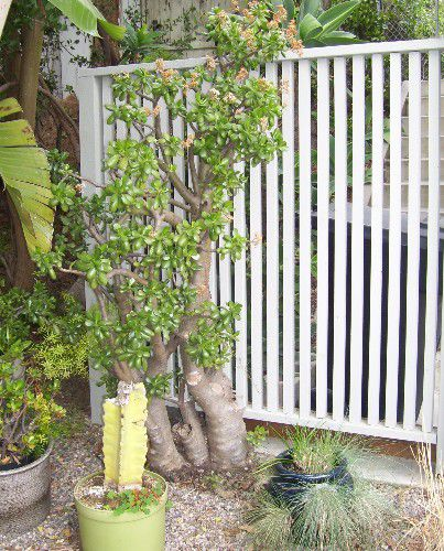 Outdoor privacy screens ideas and pictures for Outdoor patio privacy screen ideas