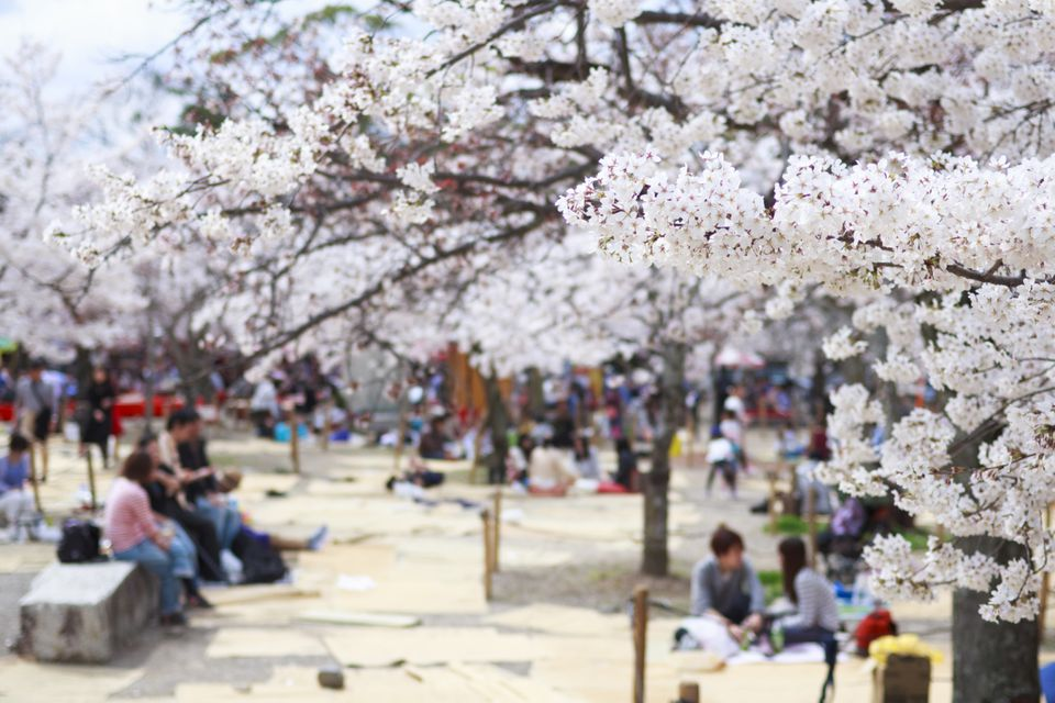 Cherry Blossoms Viewing Party