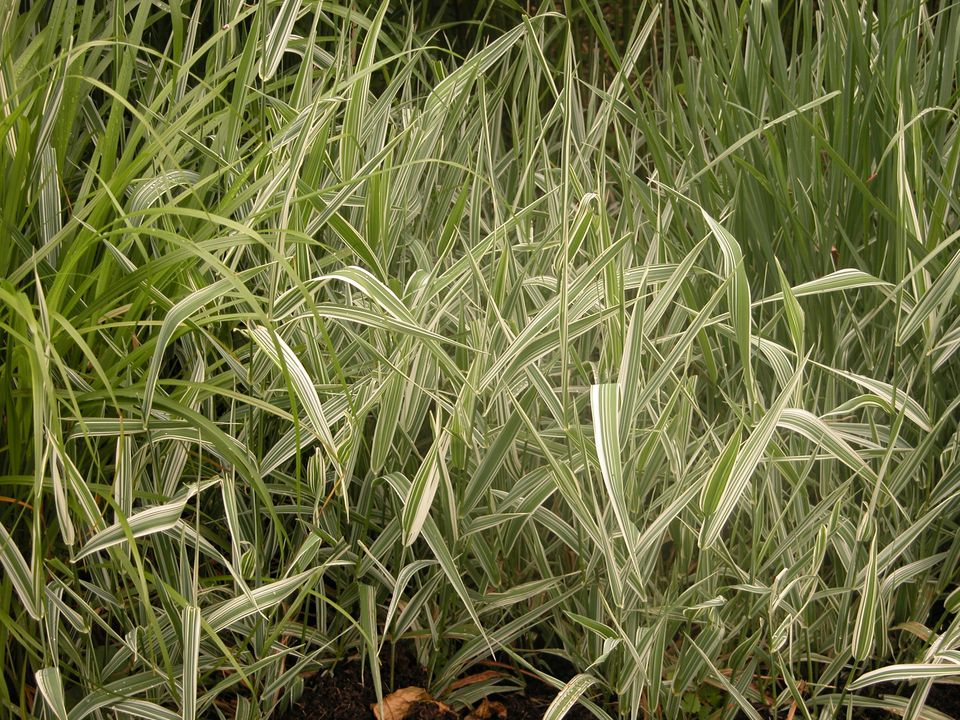 using ornamental grasses in shade garden design - Garden Design Using Grasses