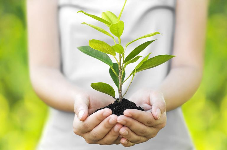 woman hand holding and planting new tree in front view