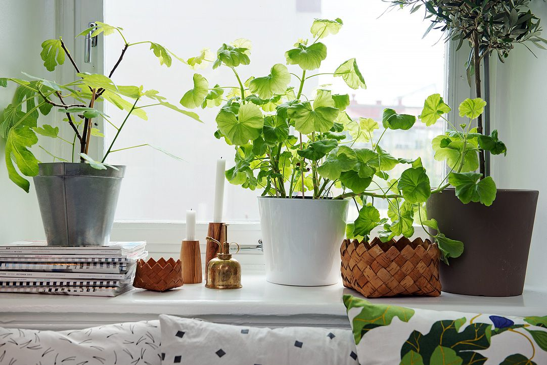 4 Best Indoor Plants For Apartments That Purify Air And