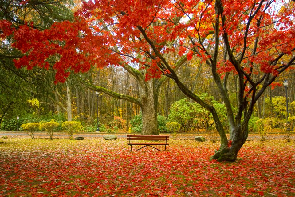 Red Fall Leaves in New England