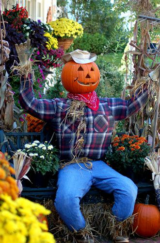 Picture: garden scarecrow surrounded by mums. Garden scarecrows look great with mums.