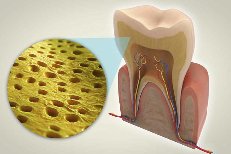 A close-up view of dentin, which contains microscopic channels called dentinal tubules