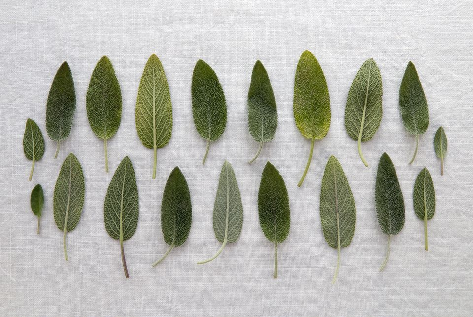 composition of sage leaves