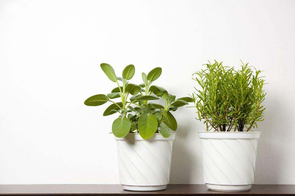 plants on white