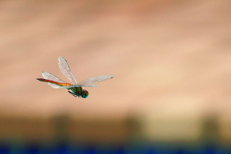 Close-Up Of Dragonfly Flying In Mid-Air