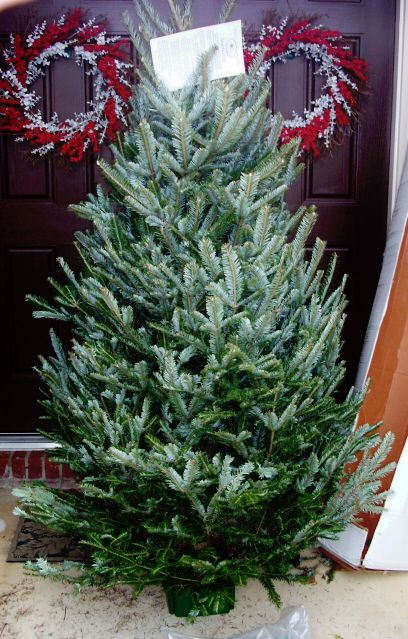 Get to Know Your Christmas Tree - Tips for Real Christmas Tree Lovers