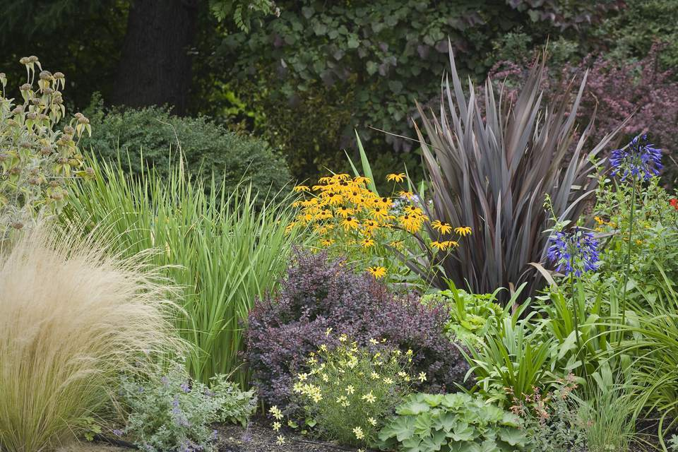 12 ornamental grasses that will stop traffic for Ornamental grass bed design