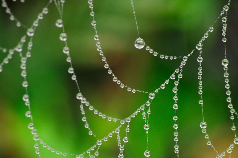 Perlas de rocío