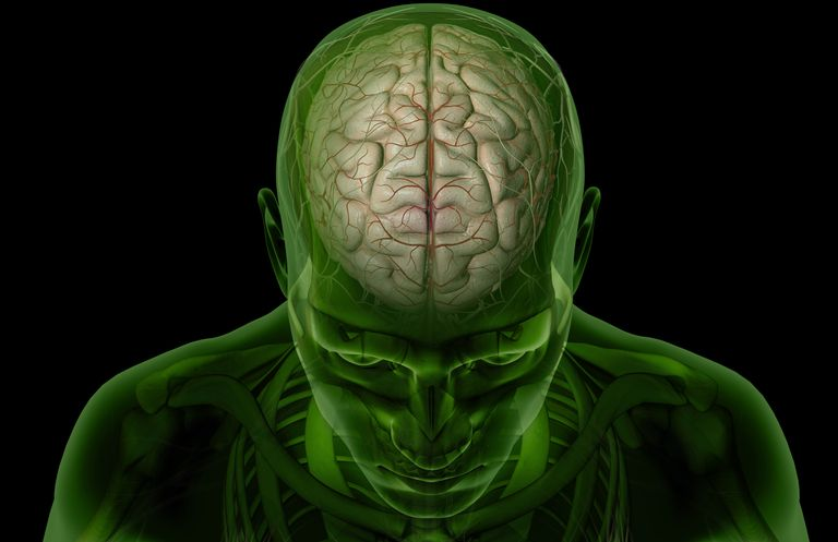 Brain arteries