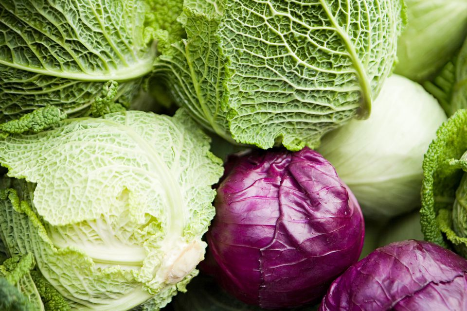 cabbage, green, red, vegetable, recipes, receipts