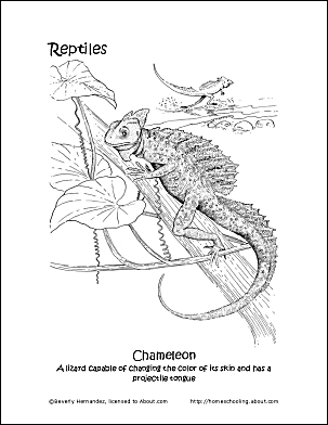 print the pdf chameleon coloring page and color the picture use your back button to return to this page and choose your next printable sheet - Chameleon Coloring Pages Printable
