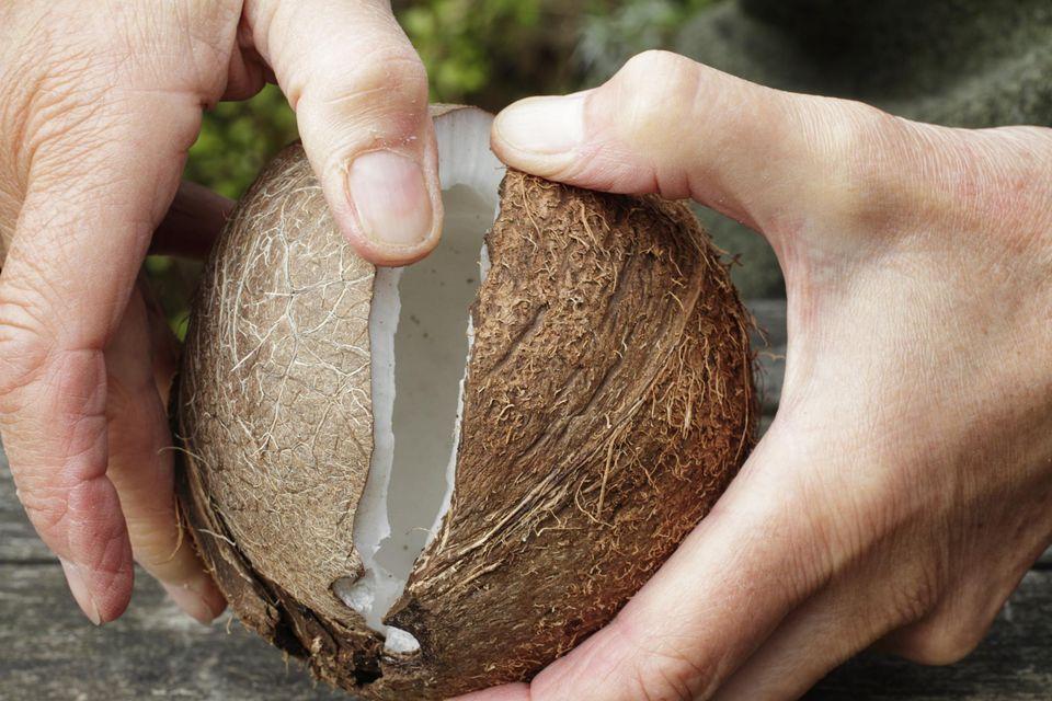 Coconut splitting open held in two hands