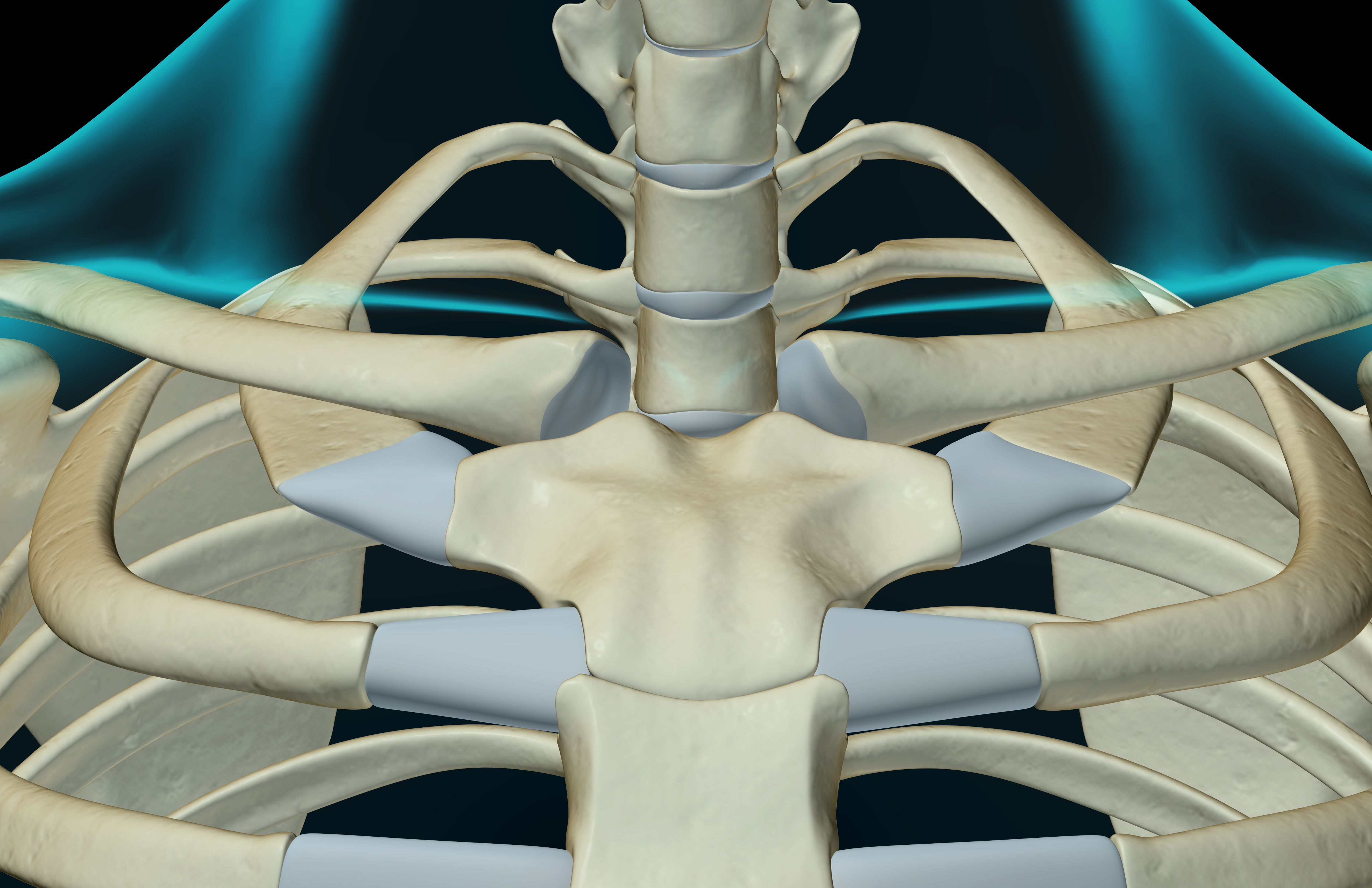 Sternoclavicular Sc Joint Injury 2549806