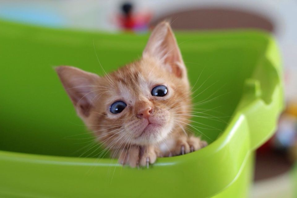 feng shui living room cat litter box