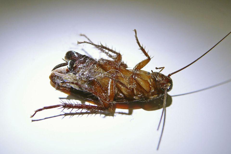 How to prepare for pest control service solutioingenieria Choice Image