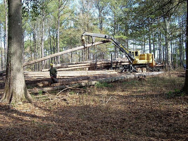 Pole Logging Deck