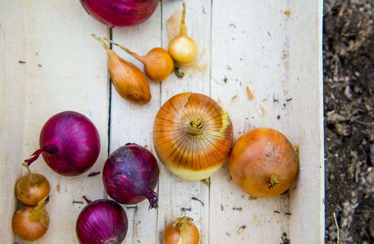 Close up of crate of variety of onions