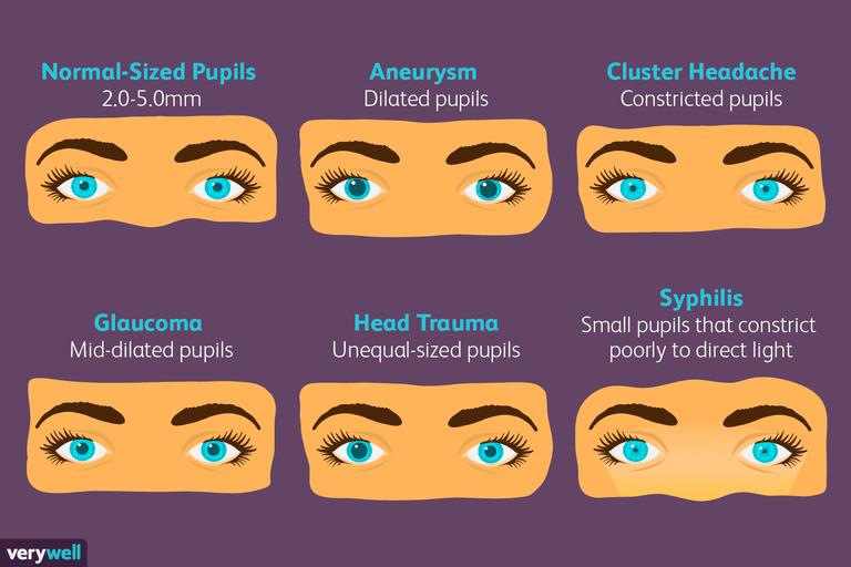 pupil size