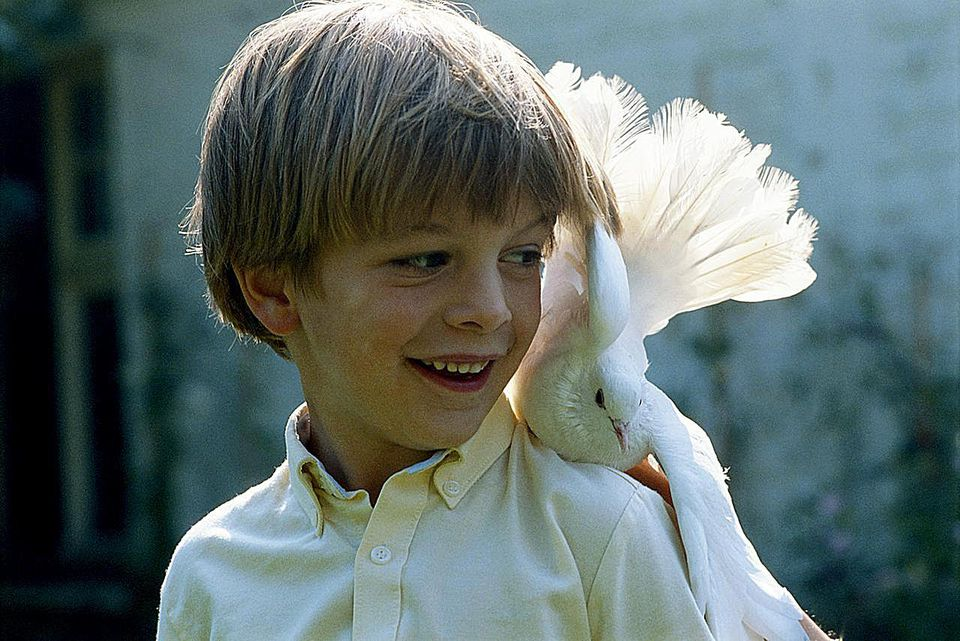 Boy (6-9) with dove on shoulder outdoors, smiling