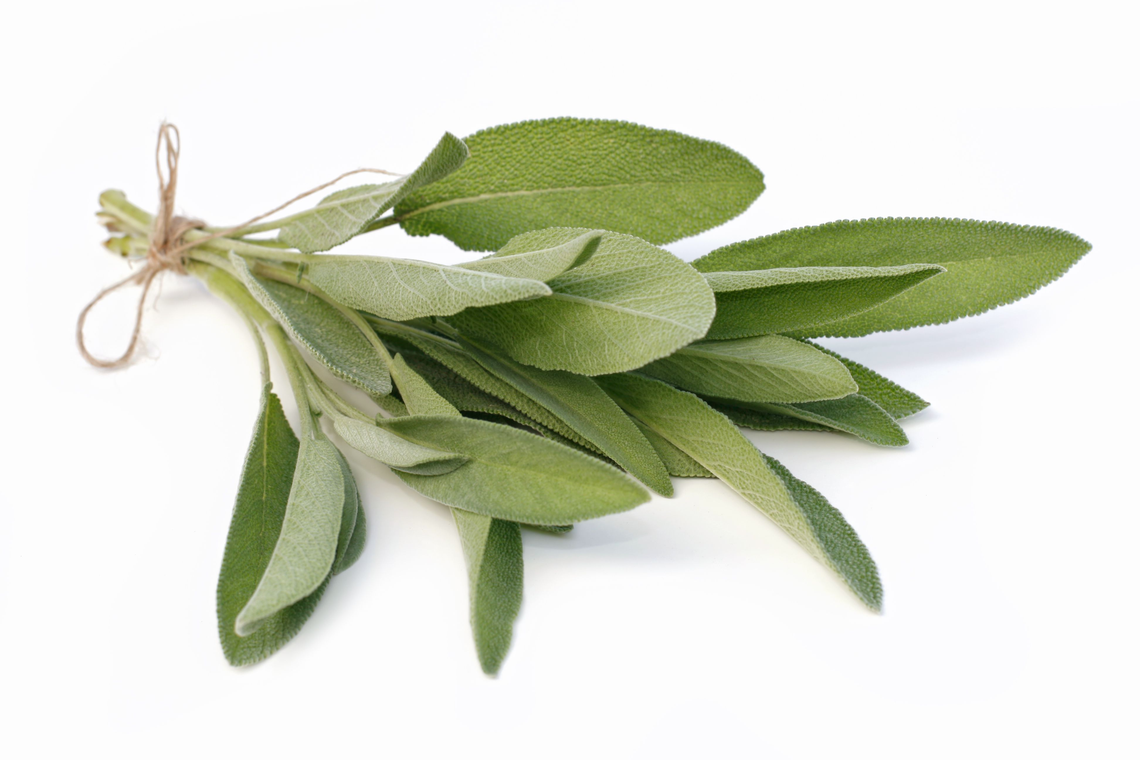 sage   faskomilo   buying and cooking guide