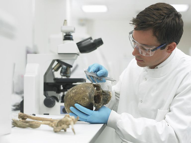 Scientist examining skull with caliper