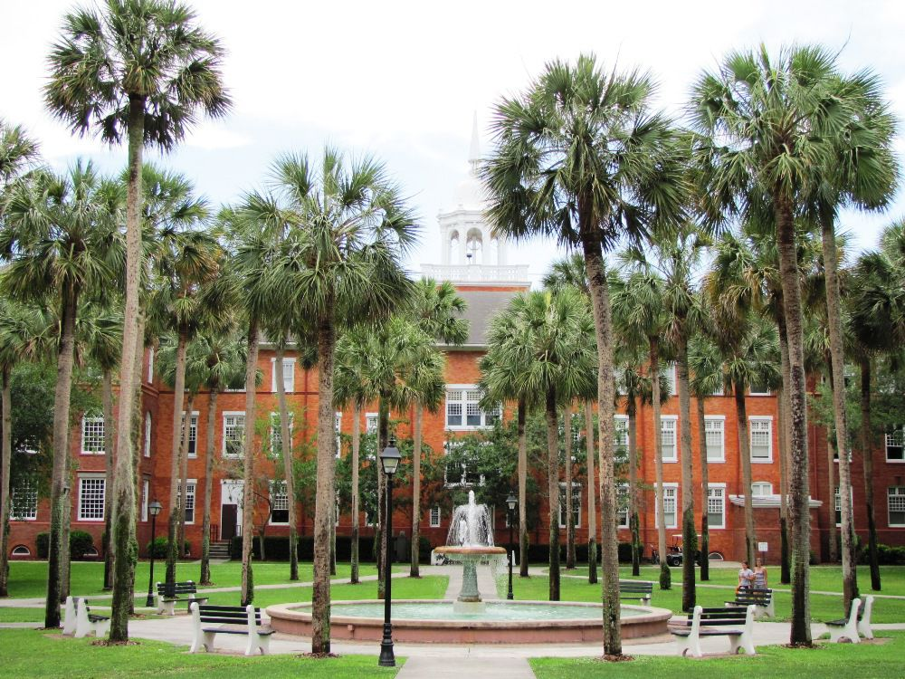 florida state university freshman essay Explore key florida state university information including application requirements, popular majors, tuition, sat scores, ap credit policies, and more.