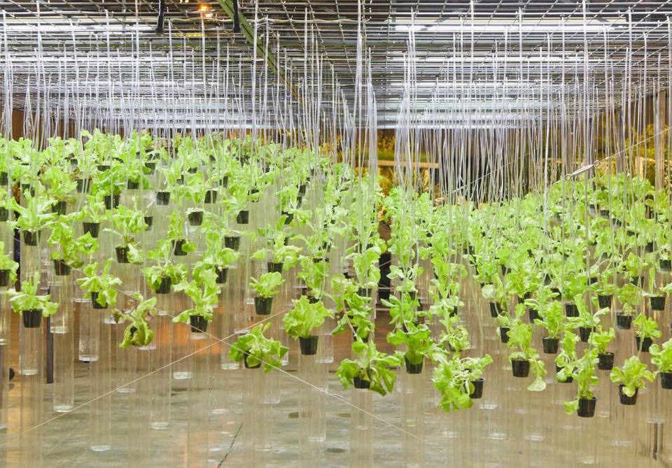 A Beginners Guide To Hydroponics