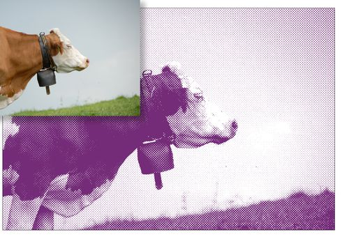 Image shows original photo of a cow and the halftone version.