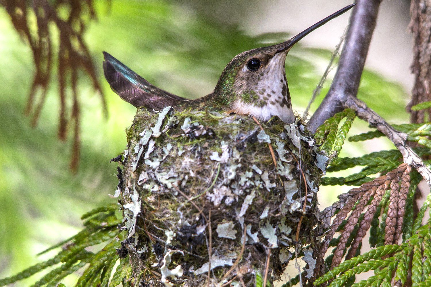 How And Why Wild Birds Decorate Their Nests