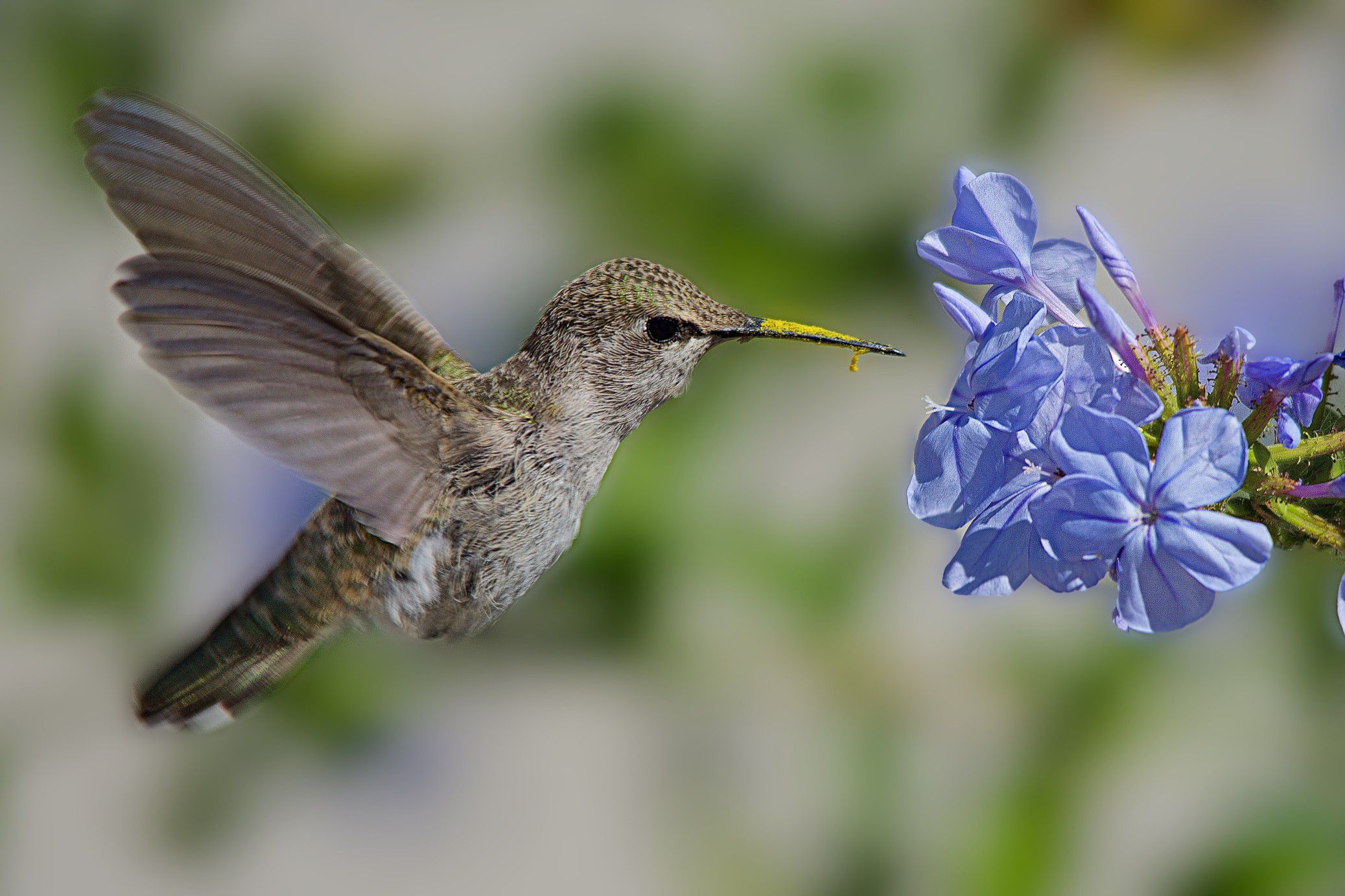 Hummingbird Habitats Ideal Areas And Conservation