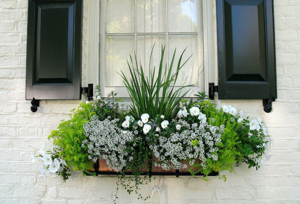 15 gorgeous window box ideas for spring spring window box mightylinksfo