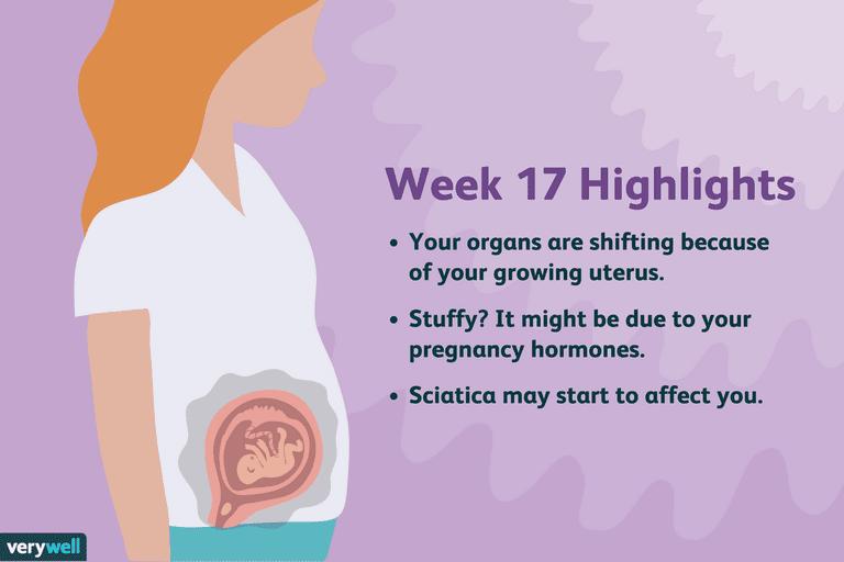 Pregnancy Week 17