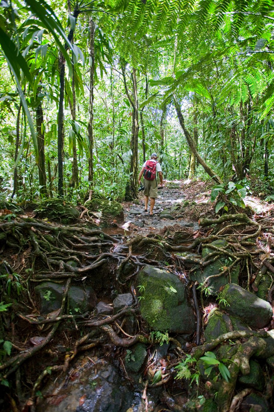 Trail to Boiling Lake, Morne Trois Pitons National Park, Dominica, West Indies