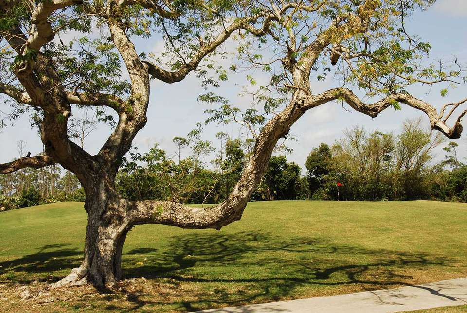Lucayan Golf Course, 14th Hole
