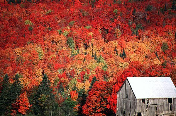 Fall foliage and old barn