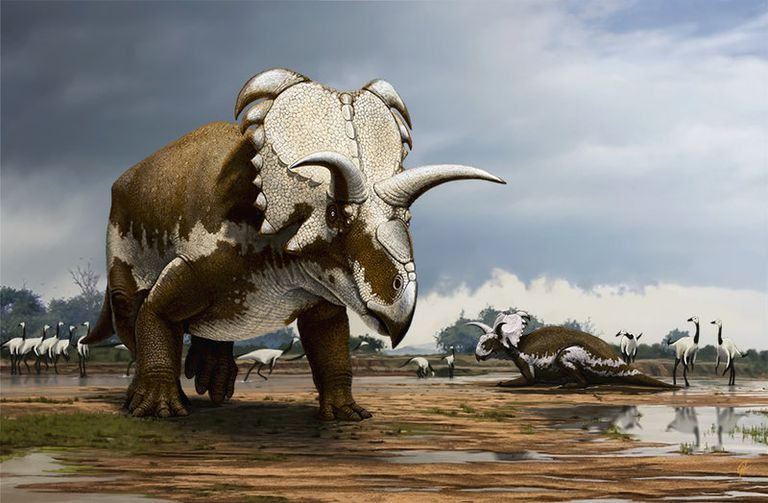 Trunk And Teeth They Preyed Relentlessly On Smaller Herbivorous Dinosaurs Not To Mention Other Theropods The Most Famous