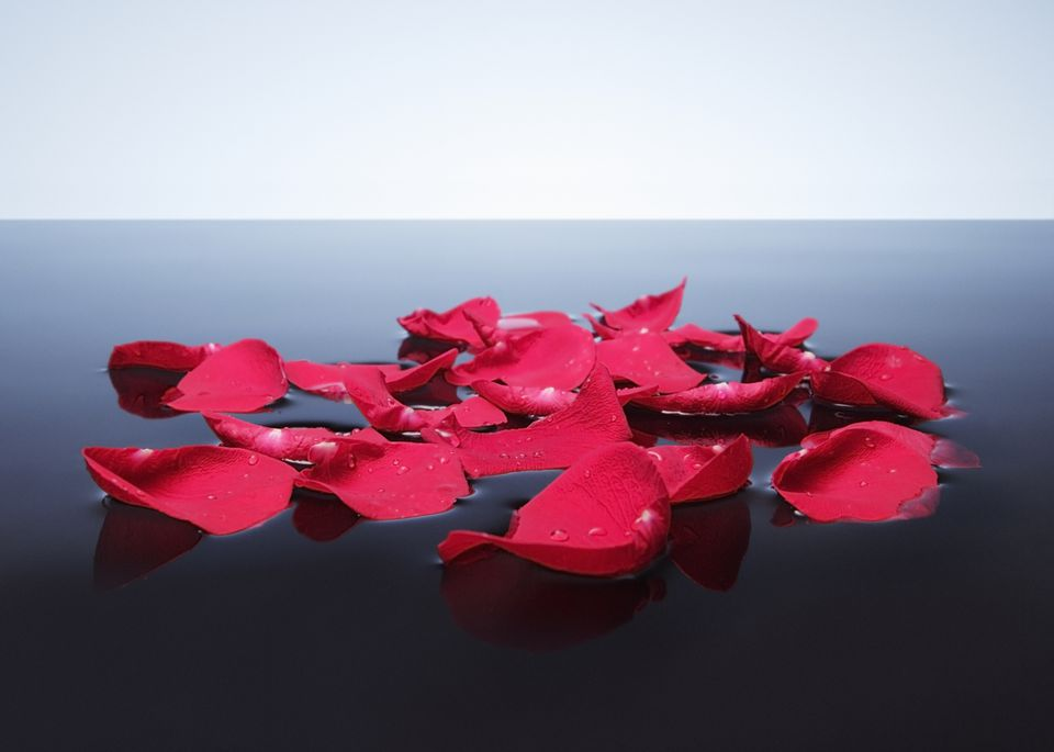 Rose petals floating on water.