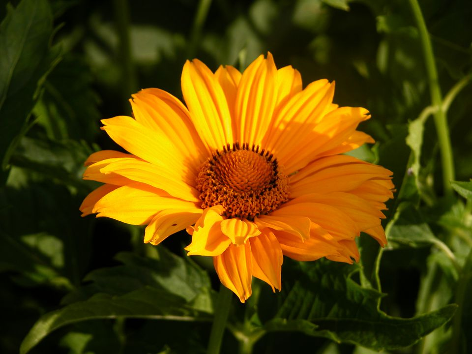 Garden design creating a sunny flower border - Like that garten ...