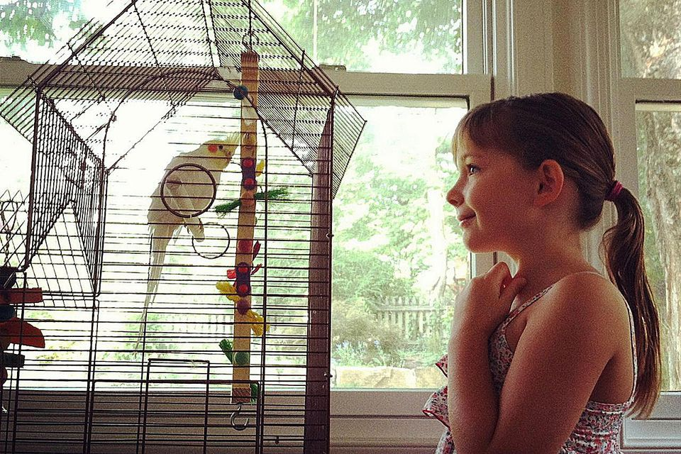 Little girl smiling at a pet Cockatiel bird in a cage. Childhood. Pets.