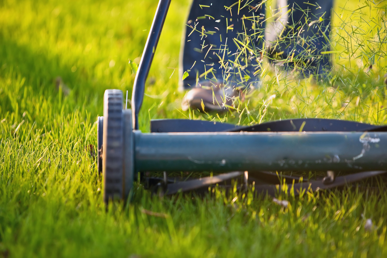 Fresh Lawn Cutting Service Near Me