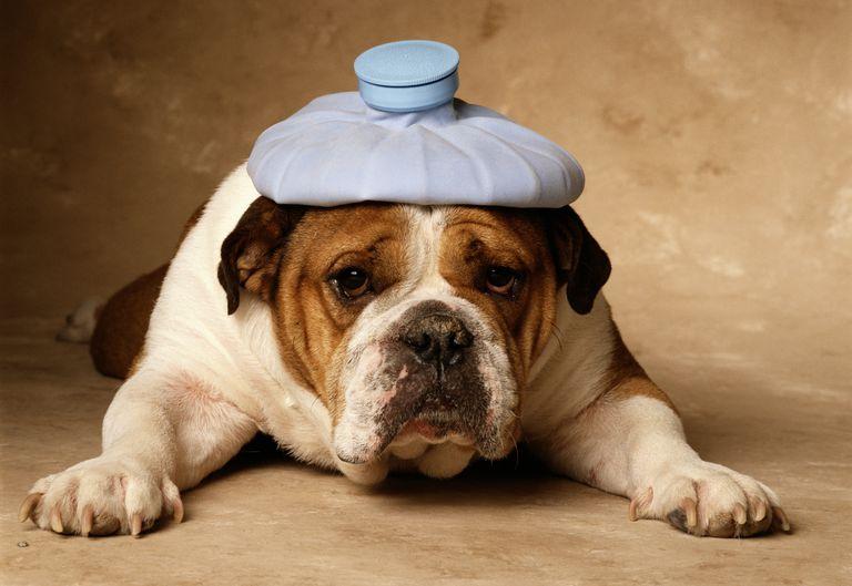 Symptoms of a Headache