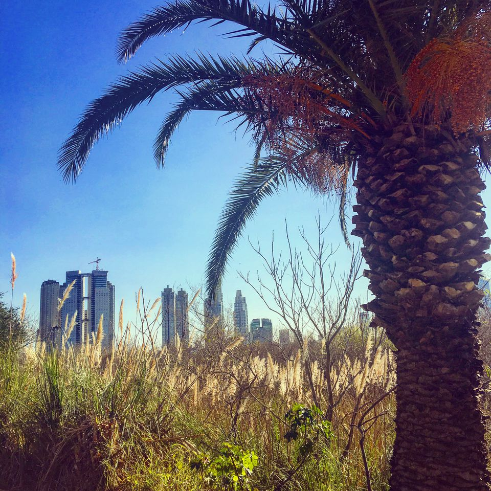 A view of Buenos Aires from The Costanera Sur Ecological Reserve